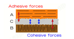 Cohesive and Adhesive forces.